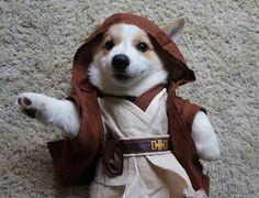 Jedi Master Of Adorableness