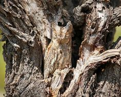 15 camouflaged owls — Beautiful birds blending in