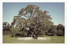 a beautiful cedar tree on a strawberry farm