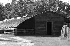Gillis Hill Farms #FayettevilleNC