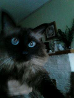 My blue eyed kid  Tiggerbabes !