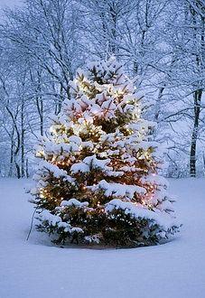 #snow #christmas