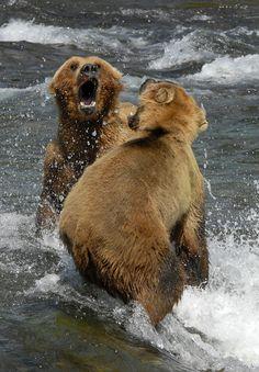 disagreement Katmai National Park, Alaska