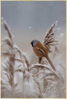 Love the Bird!