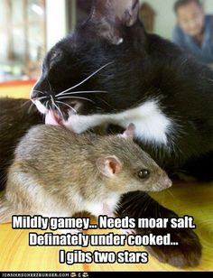 funny cat pictures - Food Crittic Kitteh