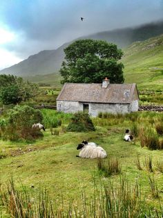 Irish Cottage Welcome...Cottage and Sheep in Connemara, Co Galway