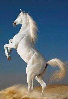 Animal Spirit Guide Horse