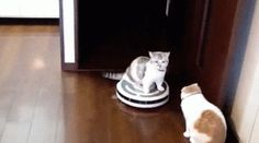 Cat on a irobot vacuum cleaner