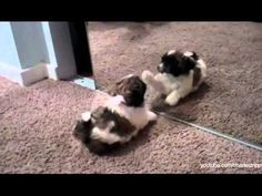 cutest video, mirrors, puppies, funni funni, kittens, anim lover, thing