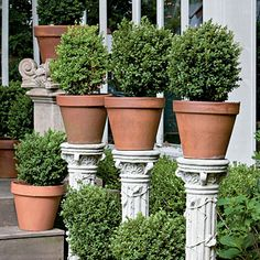 Boxwoods - Spectacular Container Gardening Ideas - Southern Living