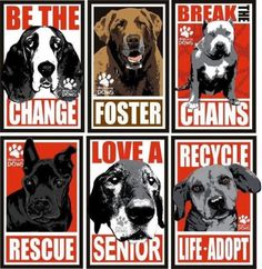 For the love of dogs, do something!  ♥ rescu, anim, life, dogs, shelter dog, pet, adopt, puppi, chang