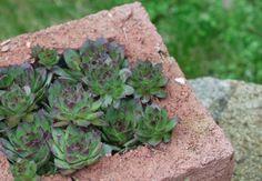 DIY Hypertufa Planter Instructions #gardentherapy #garden