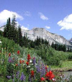 Bridger-Teton National Forest.  I will be there in the spring.