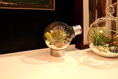New terrariums coming soon: Light bulb air plant terrariums. #lightbulb #terrariums