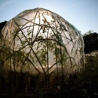 Willow greenhouse