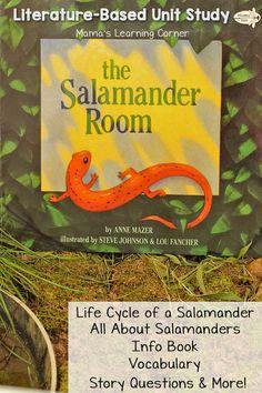 Life cycle of a salamander