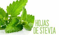 Stevia, Tips de Cocina - CocinaSemana.com - Últimas Noticias