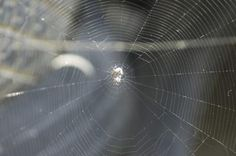 """""""Charlottes Web"""" Activities for Kids"""