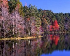 Daingerfield State Park - Hike on scenic trails, take a calming dip in a spring-fed lake or picnic under a tall canopy of pines.
