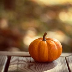 One perfect little pumpkin