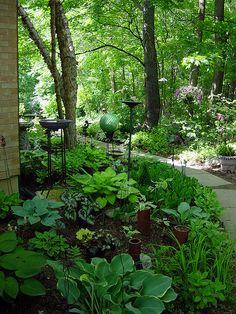 Shade garden - hostas, ferns, begonias