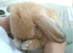 Bunny Boring