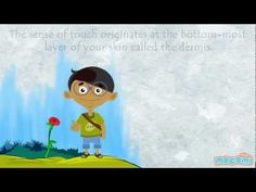 Sense of Touch - How the Body Works | Mocomi Kids