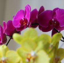 How to Regrow Orchids; orchid propagation (difficult but worth it)