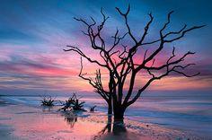 Trees at Botany Bay, Edisto Island, SC.
