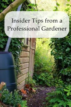 Insider tips from a professional gardener.  Tips for controlling weeds, perennials vs annuals, and good planting techniques.