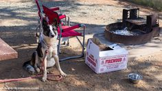 Camping tips: How to enjoy the great outdoors with your dog! #camping #hiking #outdoors