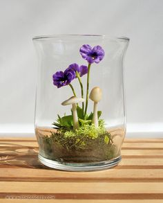 adorable ~Tiny Purple Pansy Woodland Terrarium in Repurposed Glass ~ wonder if I could keep it alive?