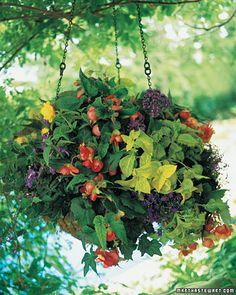 Beautiful hanging basket!