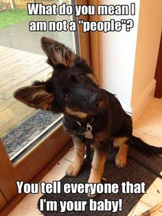 I'm pretty sure this German shepherd is a 'people'.