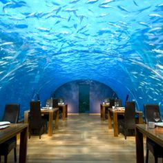 Underwater restaurant! i need to go here