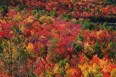 Photoshop has nothing on Mother Nature. fallfoliag, fall foliag, season, autumn, main fall, colors, forest, white mountains, mother nature