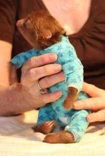 .baby sloth in pjs :)