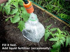 recycle bottle drip irrigation
