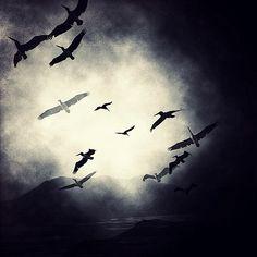 Birdland - Millo Salgado