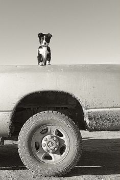 border colli, pet memorials, truck, lil friend, dog