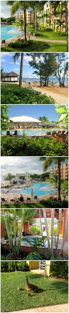 All inclusive, adults only, Sandals Whitehouse in Jamaica, part of @sandalsresorts