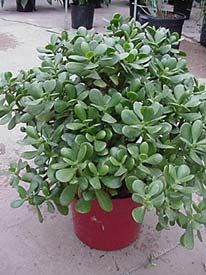 Great website! Houseplants can be looked up under botanical or common name to learn about their needs. University of Illinois Extension