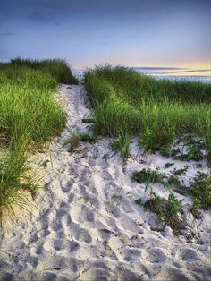 ✮ Wellfleet Beach Path - Cape Cod, MA