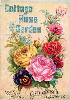 cottage rose garden vintage seed pack