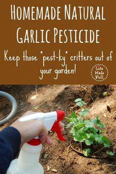 Homemade Natural Garlic Pesticide!