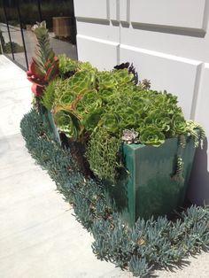 succulents at OC Mart