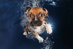 Puppies under water