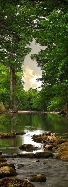 forests, water, nature, tree, peaceful places, natur beauti, rainforest, river, natural beauty