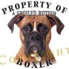 I love my boxer!
