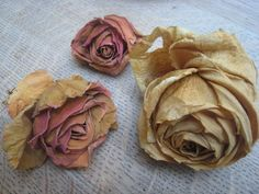 dried roses. amazing